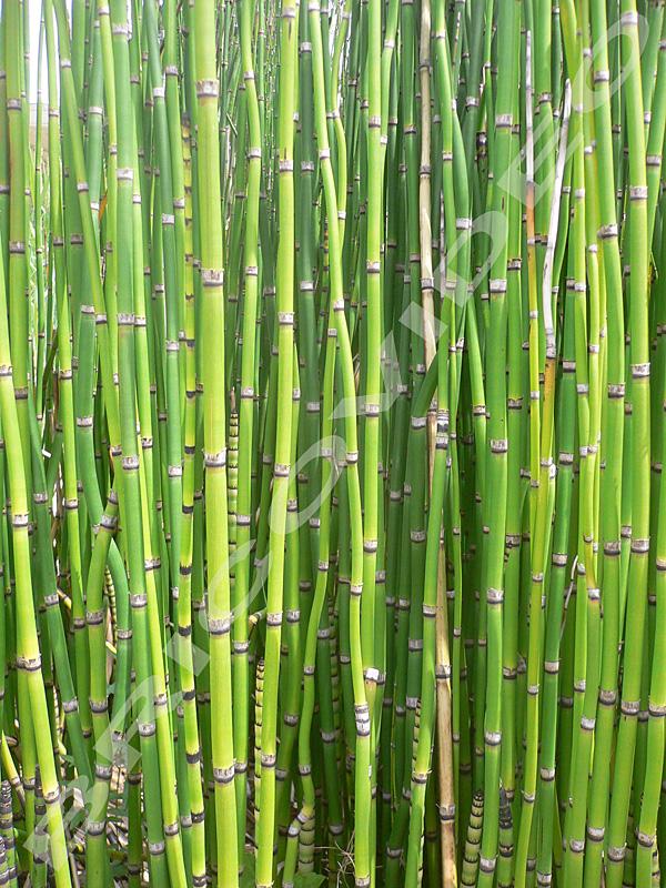 nature materiaux ecologique