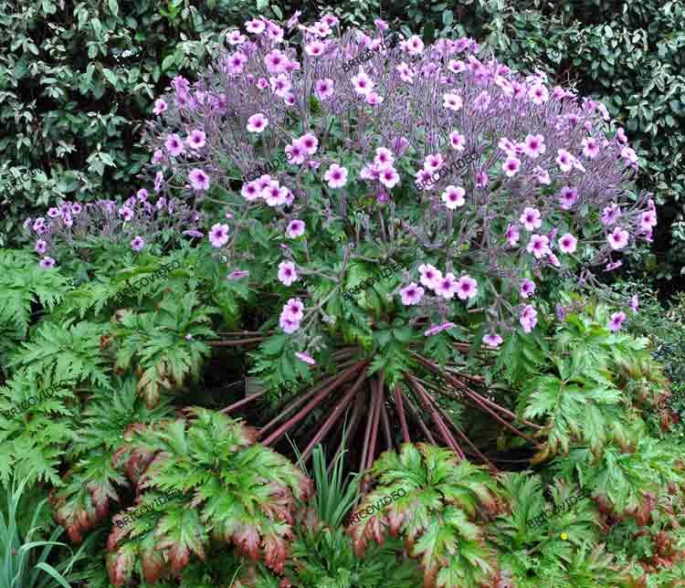 Forum jardinage conseils pour d truire souche d 39 arbre - Detruire souche arbre rapidement ...