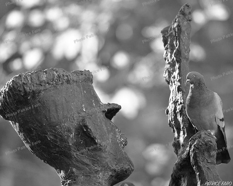 bricovideo image du jour le pigeon