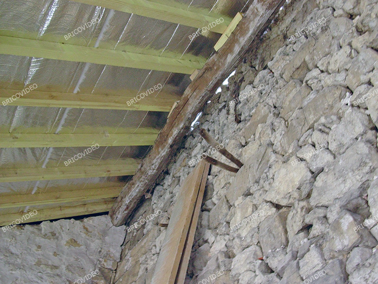 Champignon sur toiture ardoise